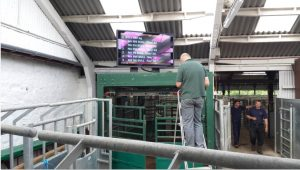 Commercial TV Display Screen Installation